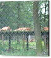 Six Flags Great Adventure - Animal Park - 121254 Acrylic Print