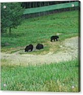 Six Flags Great Adventure - Animal Park - 121255 Acrylic Print