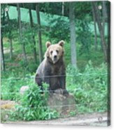 Six Flags Great Adventure - Animal Park - 121263 Acrylic Print