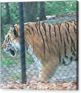 Six Flags Great Adventure - Animal Park - 121278 Acrylic Print