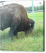 Six Flags Great Adventure - Animal Park - 121280 Acrylic Print