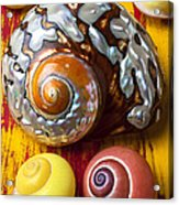 Six Snails Shells Acrylic Print