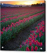 Skagit Valley Blazing Sunrise Acrylic Print
