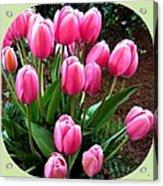 Skagit Valley Tulips 9 Acrylic Print