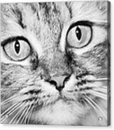 Skc 1498 Wide Eyed Acrylic Print
