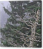 Skeletal Treescape Acrylic Print