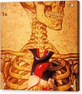 Skeleton And Heart Model Acrylic Print