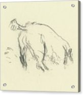 Sketch Of A Dog Digging A Hole Acrylic Print