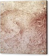 Sketch Of A Roaring Lion Acrylic Print by Leonardo Da Vinci