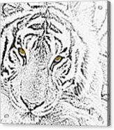 Sketch With Golden Eyes Acrylic Print
