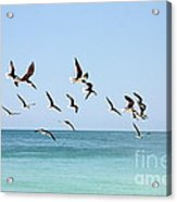 Skimmers And Swimmers Acrylic Print by Carol Groenen