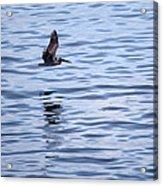 Skimming The Water Acrylic Print