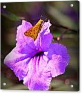 Skip It Insect Art Acrylic Print
