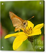 Skipper In The Flowers Acrylic Print