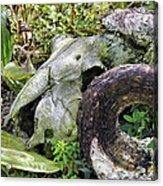 Skull At Cluny Gardens Acrylic Print