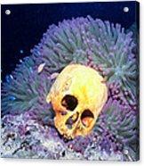 Skulls 2 Acrylic Print