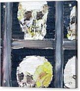 Skulls In The Crypt Acrylic Print