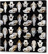 Skulls Of Various Dog Breeds Acrylic Print