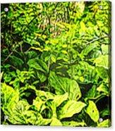 Skunk Cabbage Thicket Acrylic Print