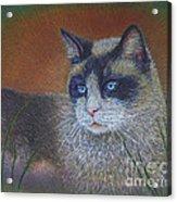 Skweela Acrylic Print