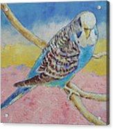 Sky Blue Budgie Acrylic Print