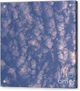 Sky Full Of Cloud Puffs Acrylic Print