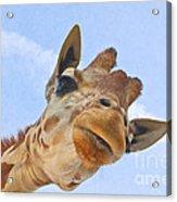 Sky High Giraffe Acrylic Print