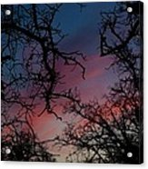 Sky In Blue And Magenta Acrylic Print