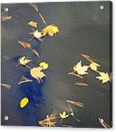 Sky Of Leaves Acrylic Print