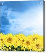 Sky Sunflower Acrylic Print