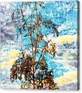Sky Tree Acrylic Print