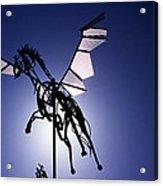 Skyhorse Acrylic Print