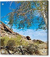 Slanted Rocks And Sycamore Tree  In Andreas Canyon In Indian Canyons-ca Acrylic Print