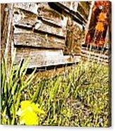 Slash Of Spring Acrylic Print