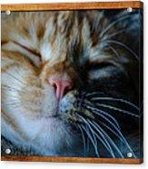 Sleeping Abby Framed Acrylic Print