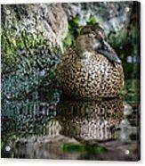 Sleeping Duck Acrylic Print