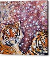 Sleeping Tigers Dream Such Sweet Dreams Kitties In Heaven Acrylic Print
