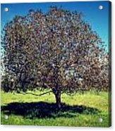 Sleeping Tree  Acrylic Print
