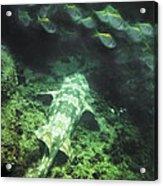 Sleeping Wobbegong And School Of Fish Acrylic Print
