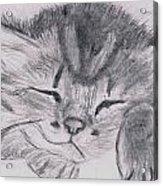 Sleepy Kitten Acrylic Print