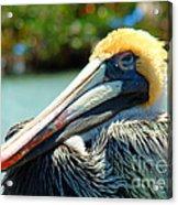 Sleepy Pelican Acrylic Print