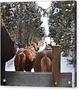 Sleigh Ride Dwn A Snowy Lane Acrylic Print