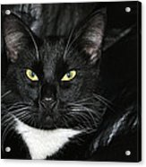 Slick The Black Cat Acrylic Print