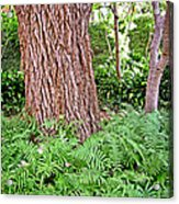 Slippery Elm And Ferns Acrylic Print