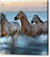 Slow Motion Horses Acrylic Print