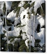 Slow Snow Melt Acrylic Print