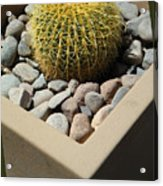 Small Barrel Cactus In Planter Acrylic Print