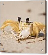 Small Crab On The Beach Acrylic Print