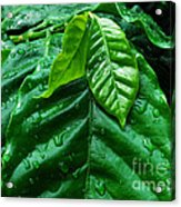 Small Leaves With Water Drops Acrylic Print