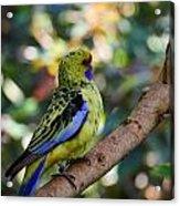 Small Parrot Acrylic Print